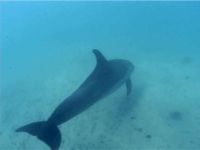 Delfínek - Video - Potápěčské centrum Don Felder 3a57295a3c