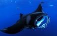Potápění s PLANETOU